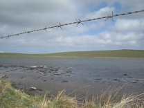 Loch Stenness from the fieldwalk