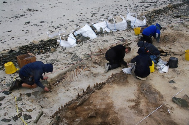 excavating whales cata sand